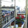 Emporio Rimini: un supermercato dove non servono i soldi