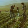 """Percorso """"Agricoltura Organica e Rigenerativa: come prendersi cura della Terra"""""""