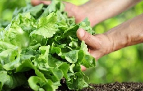 Ode alla terra (e voglia di evasione): in Italia è boom di orti in affitto