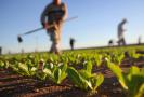 Opportunità: una work experience nell'agricoltura biologica