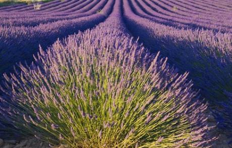 Ideare e curare il giardino domestico:un corso alla Mag