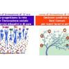 Co-progettare in rete e gestire i Beni Comuni: due corsi formativi